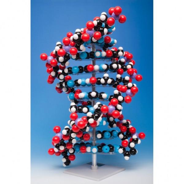 MKS-122-10_DNA_10_layer_semi-spacefilling_model